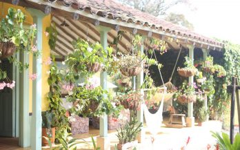 plants colombian home