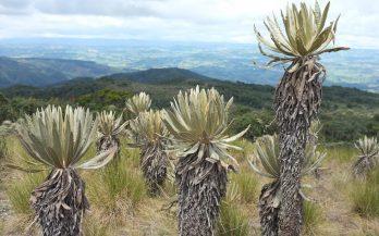 paramo plants, mountains, trekking