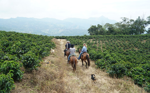 horseback riding in coffee farm