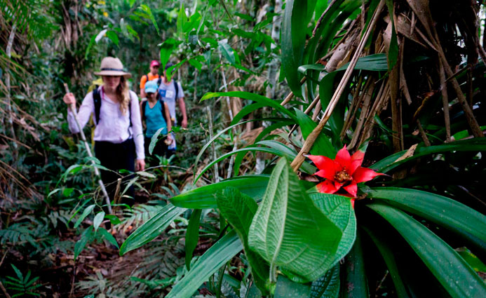jungle hiker with flower