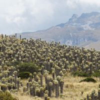 Paramo Los Nevados hike