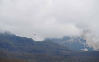 bird flying in mountains