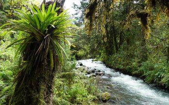 river jungle los nevados colombia