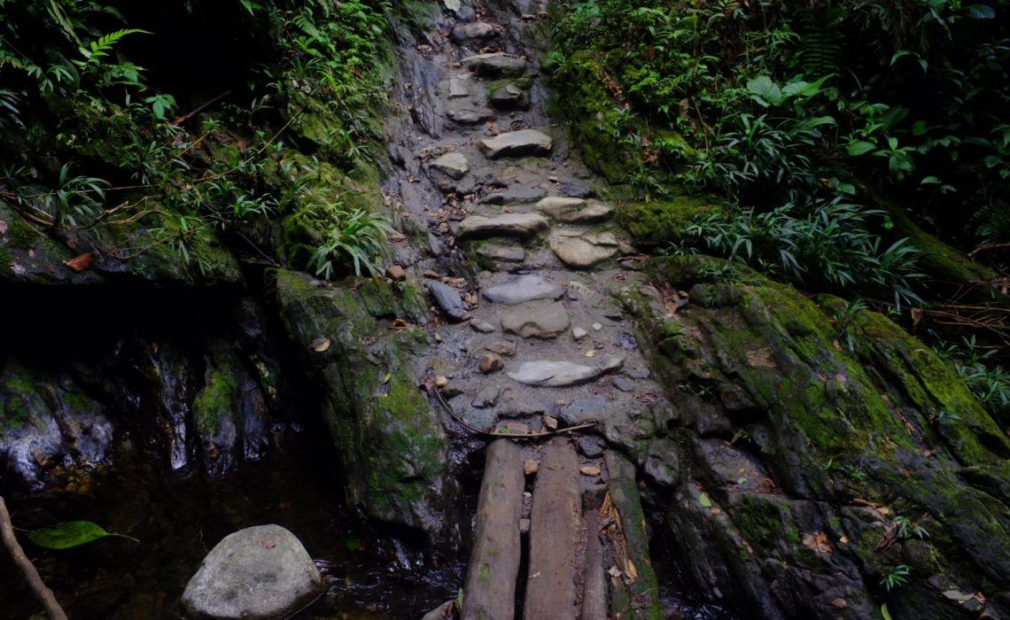 jungle path bridge