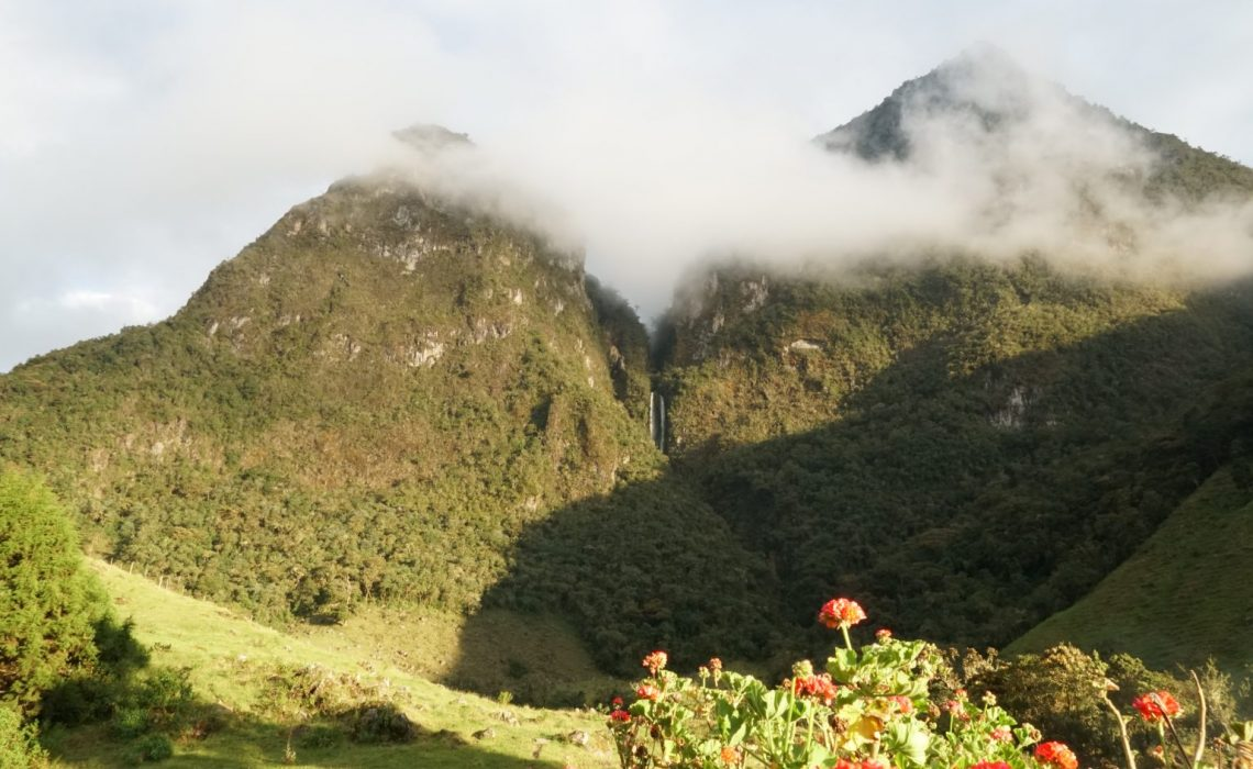 flowers mountains colombia los nevados