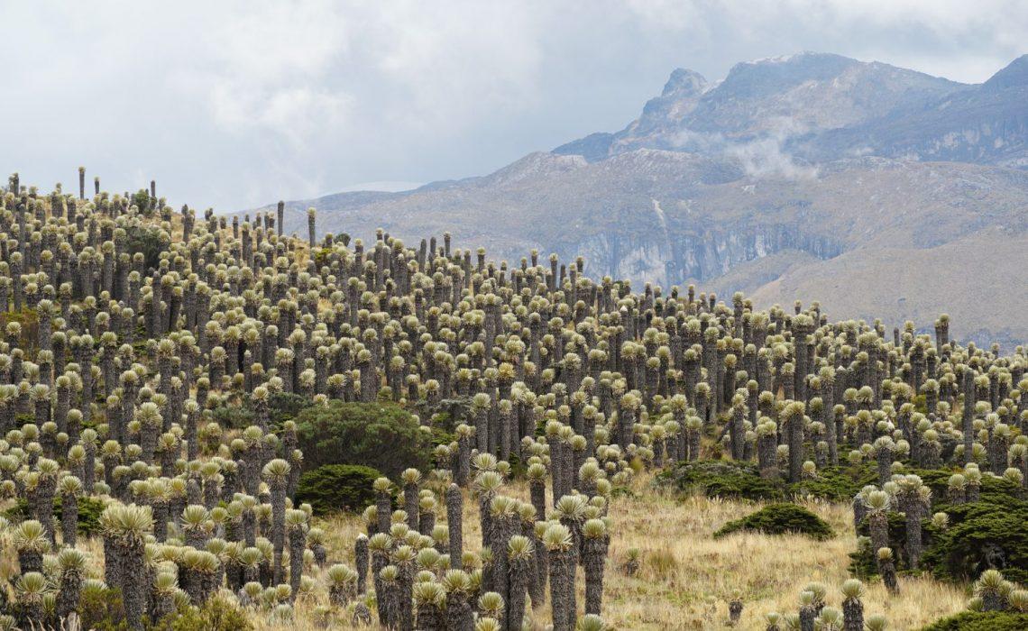 Paramo Los Nevados Colombia trek