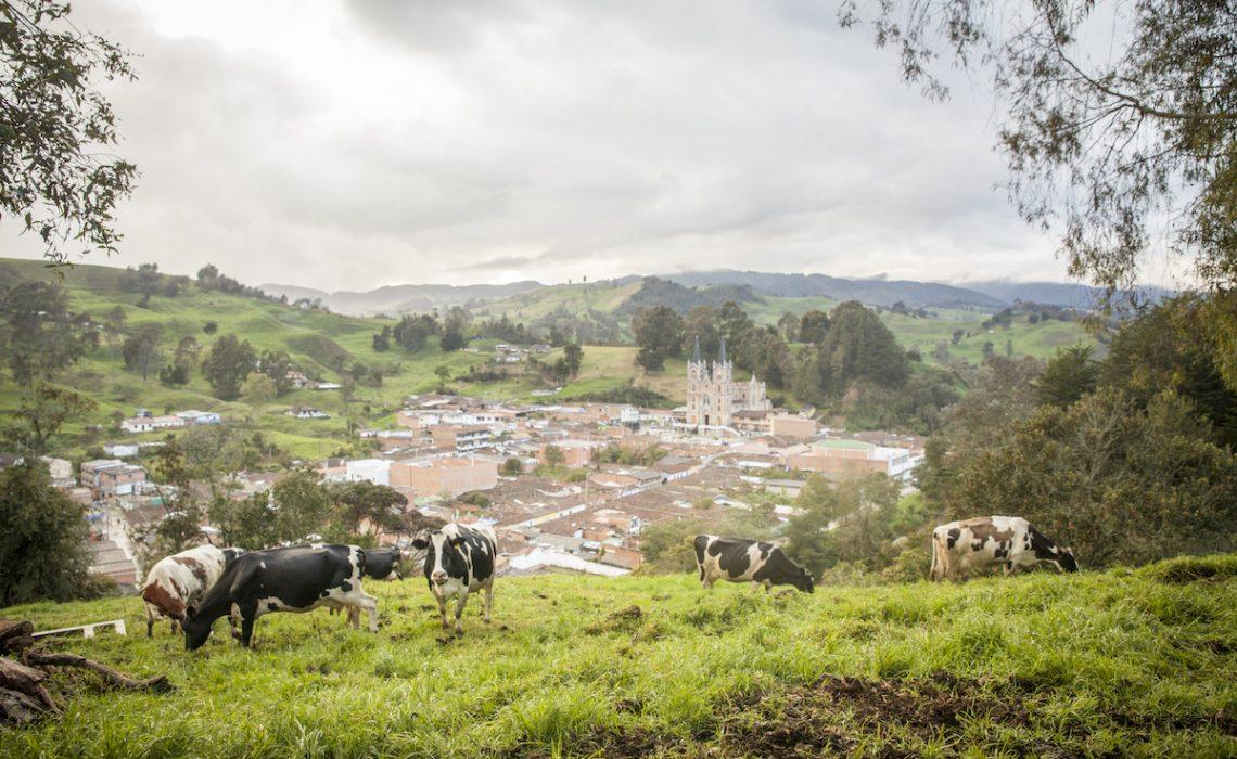 Belmira cow mountain trek