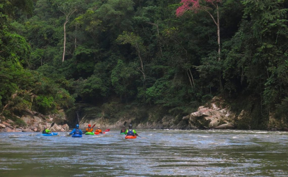kayakers in flat water with jungle