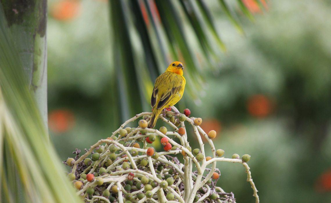 bird colombia jungle
