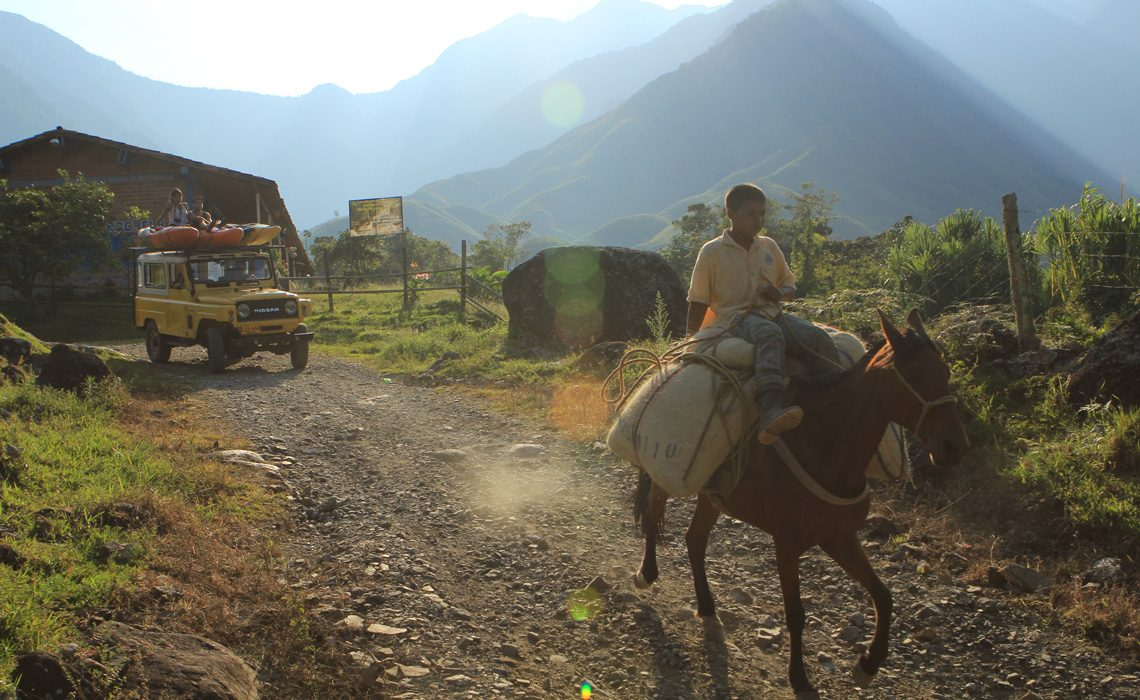 boy on horse with coffee and nissan patrol