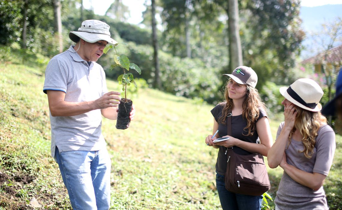 coffee plant with guide