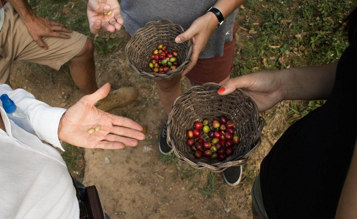 hand picked coffee beans