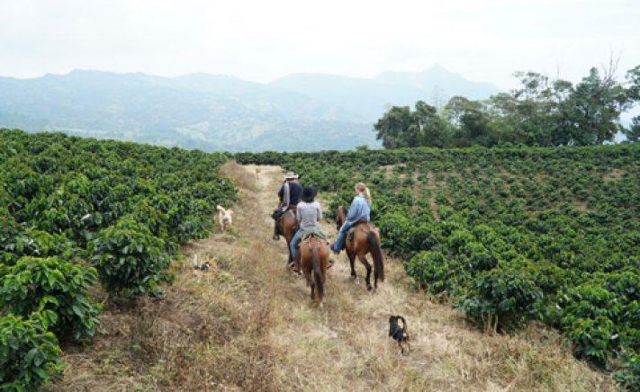 horseback riding in coffee farm
