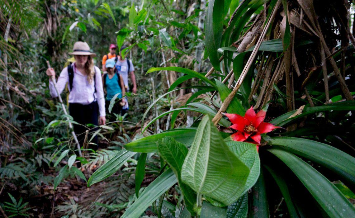 hiker jungle flower