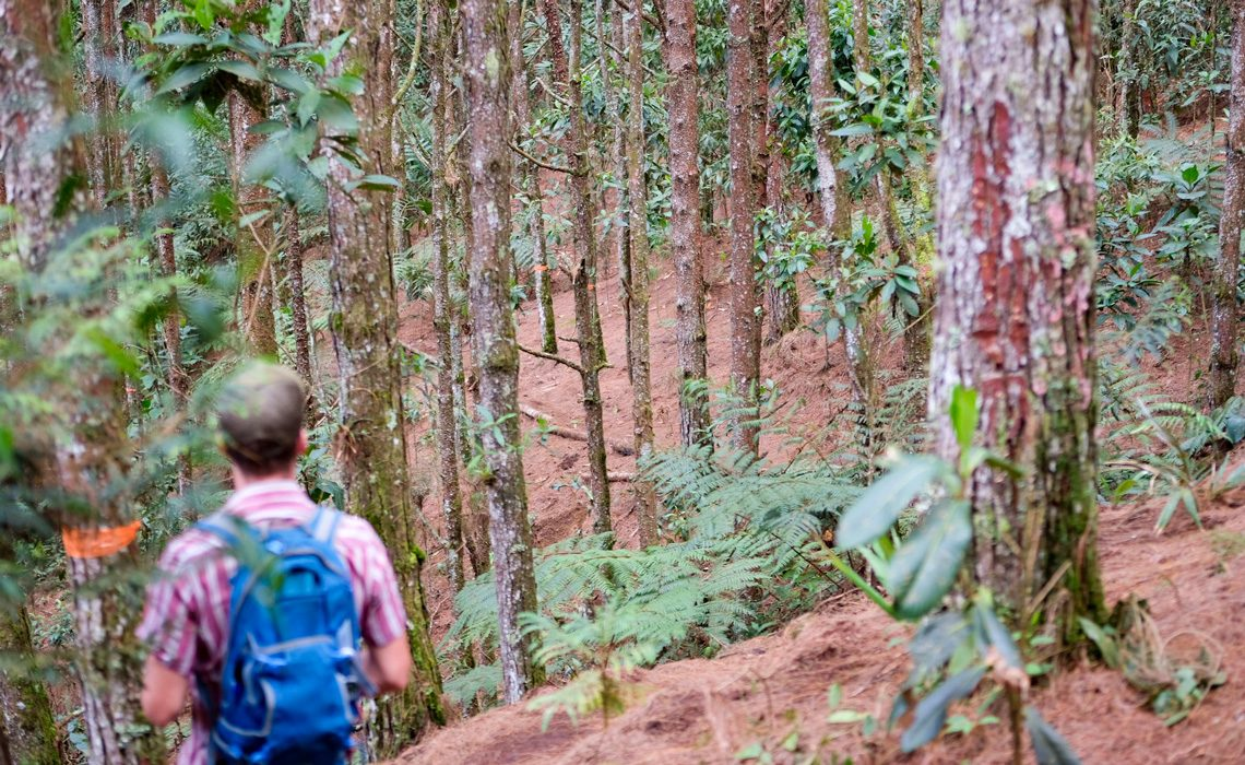 pine forest colombia
