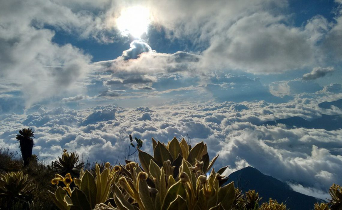 cloud forest los nevados