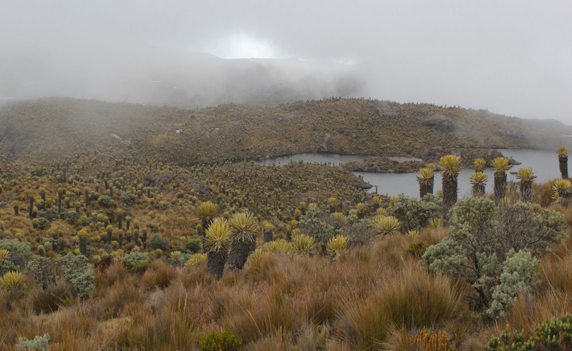 Colombian Landscape los nevados