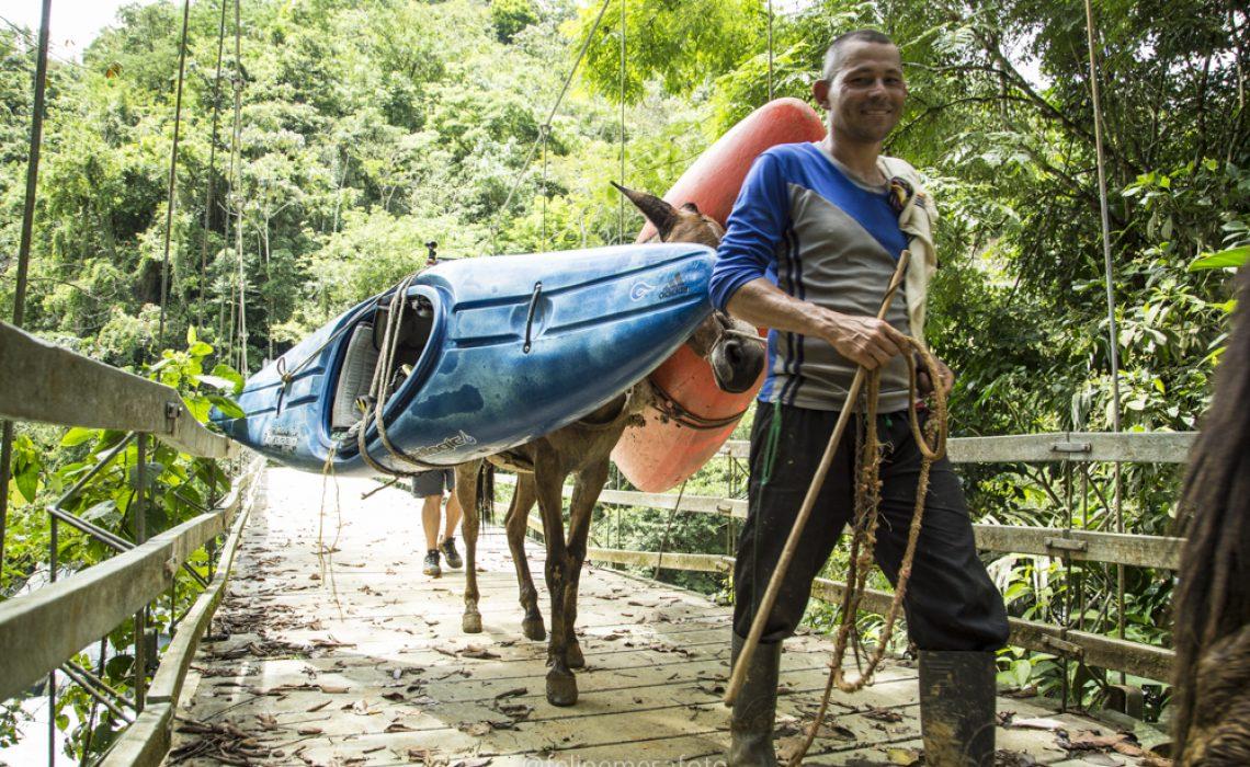 mules guide kayak