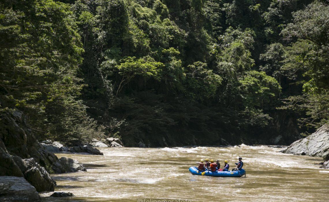 rafting forest jungle