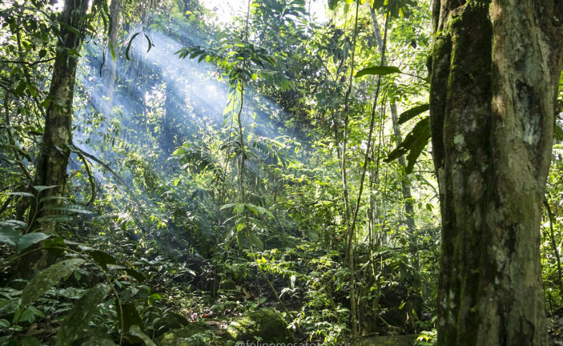 jungle sunlight