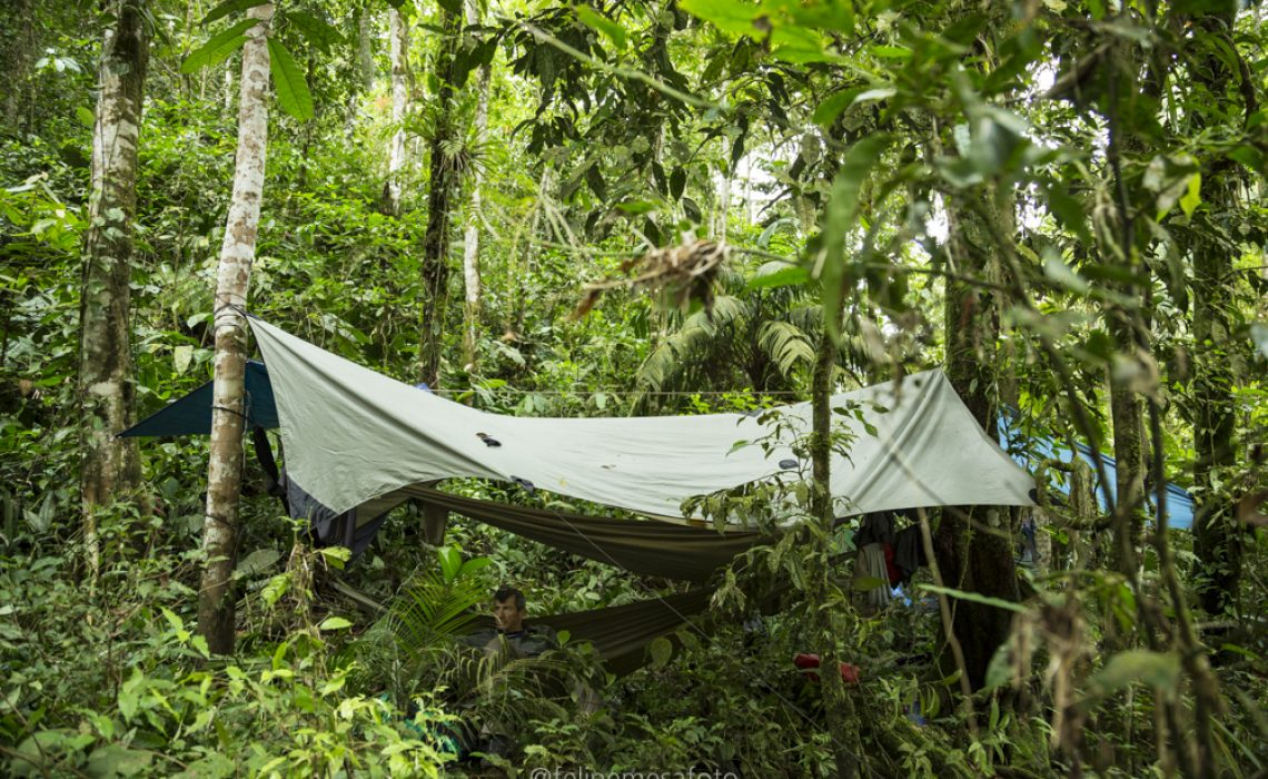 sheltered hammock in the jungle