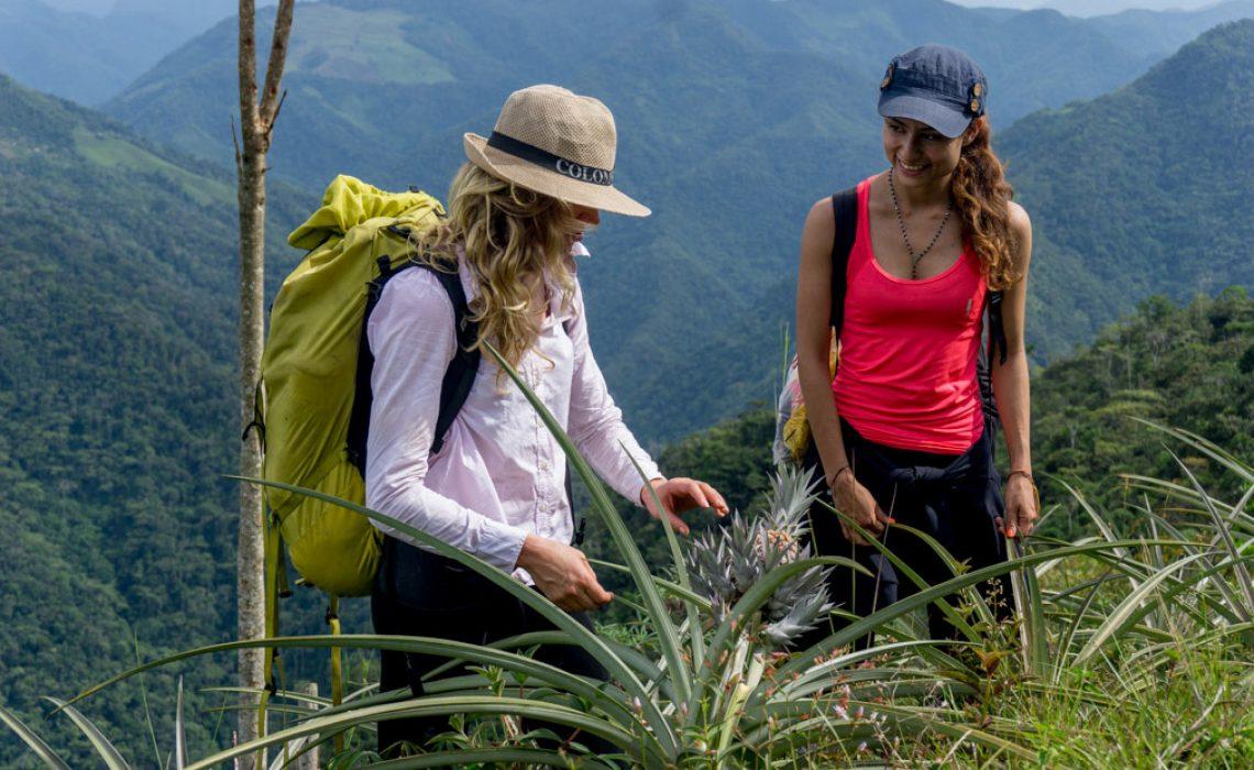 hike trek jungle plants mountains